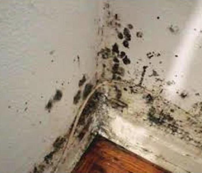 Mold Remediation Does Your Green Bay Home Have A Mold Problem?